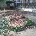 Repasando bancales en la Huerta del Angel
