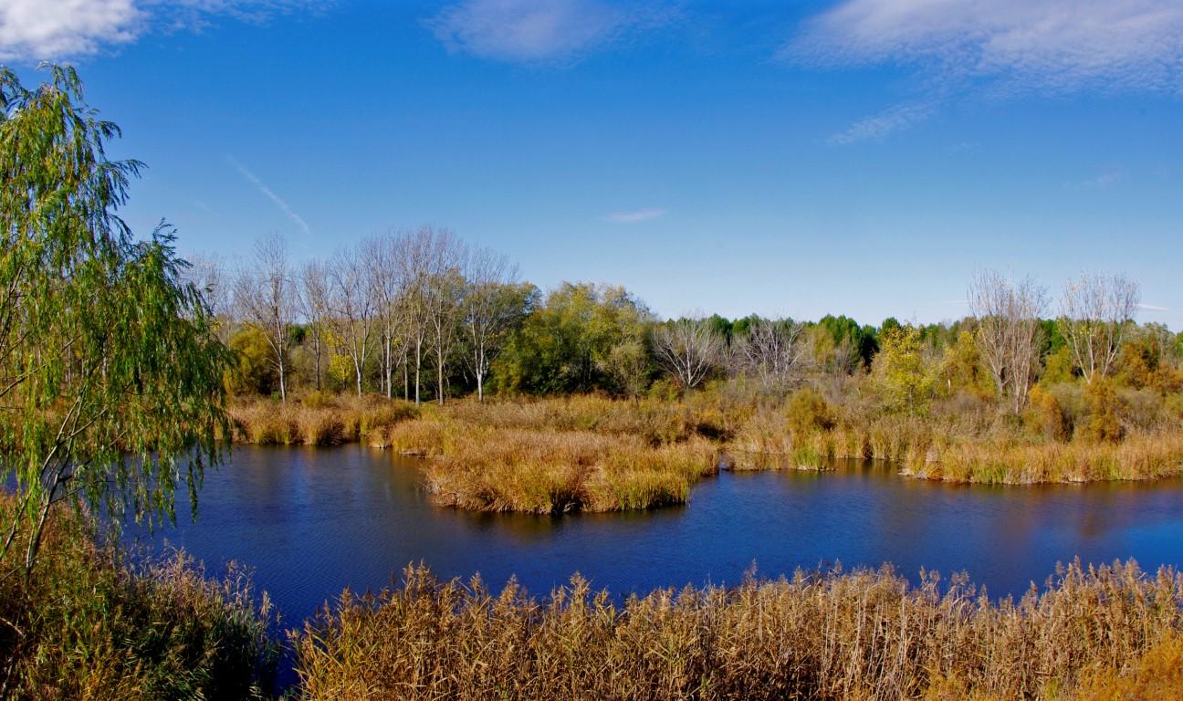 Presentación de la Plataforma Valle del Henares para la Defensa del Medio Natural